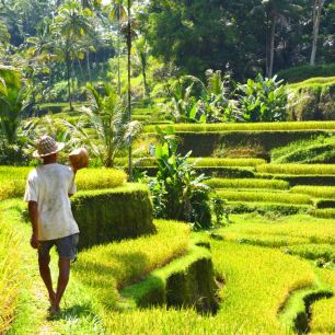 Bali - Rice Terrace Of Tegallagang